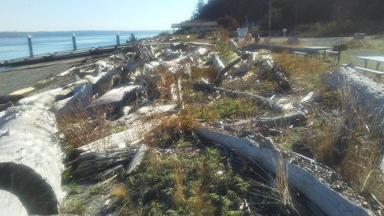 Clinton, วอชิงตัน: Possession Point Beach - Drift Wood