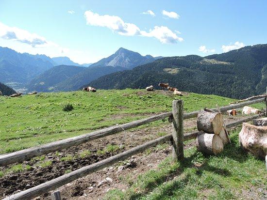Paularo, Italy: ...I pascoli...
