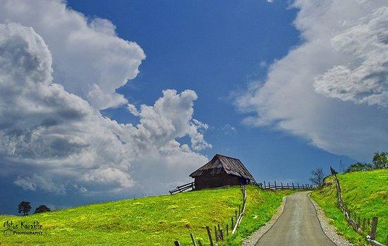 Tara National Park, Σερβία: Zaovine cabins, Tara mountain