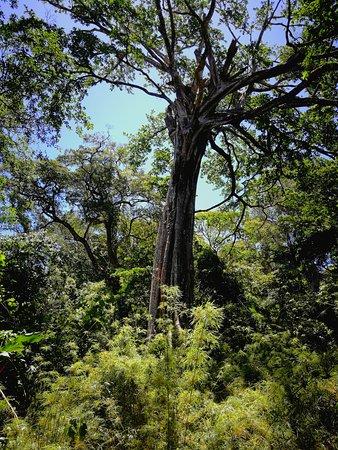 Rincon de La Vieja National Park: around entrance