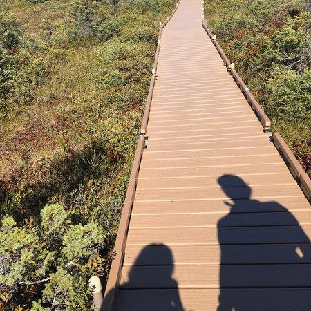 Orono Bog Boardwalk: photo2.jpg
