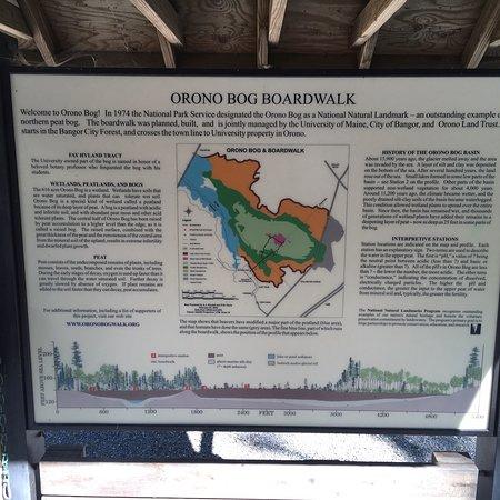 Orono Bog Boardwalk: photo4.jpg