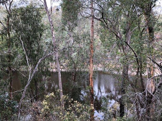 Maraylya, Australia: View from my cabin to the Billabong