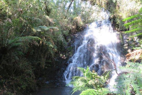 National Park of Araucarias
