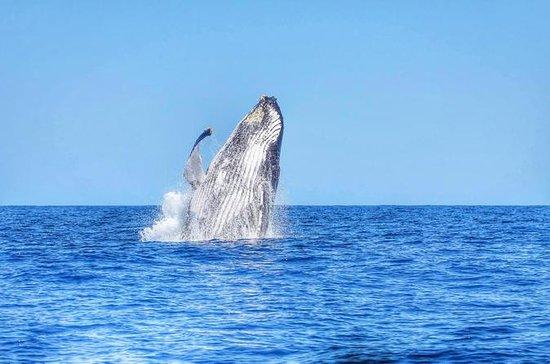 Nage avec des dauphins sauvages et...