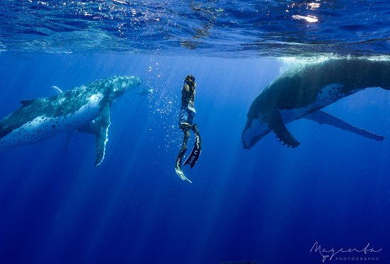 Neiafu, Tonga: Curious humpbacks around our Guide, Maire, Te'muu