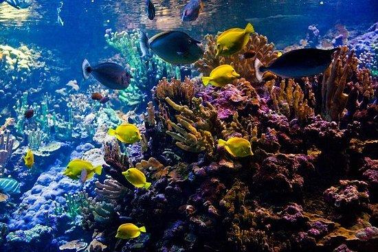 Fiji Snorkeling Tour em Bega Lagoon