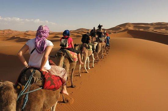 Tre giorni di cammello tunisino Sahara