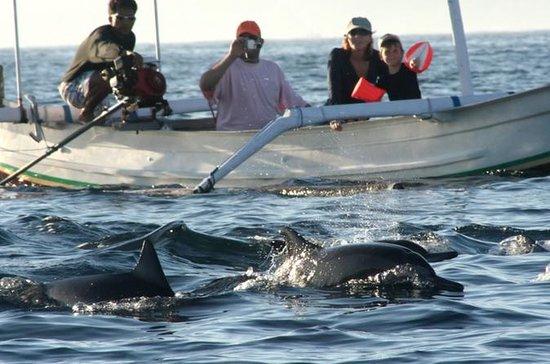 Tour de delfines de Bali a Lovina...