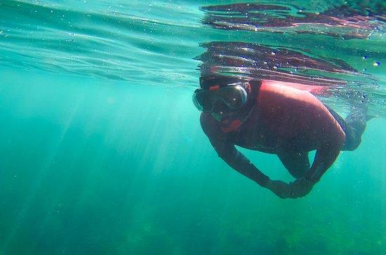 Plongée libre