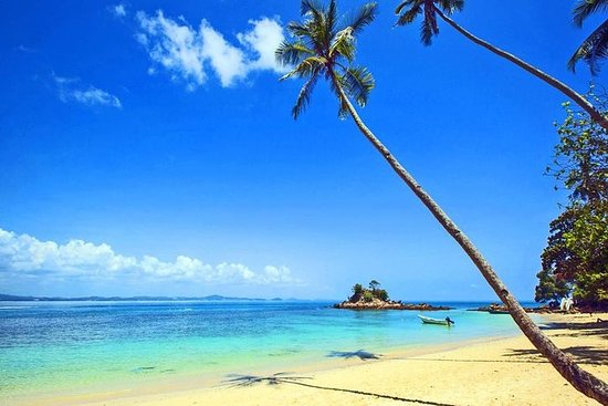 Saona Island Experience From Punta...