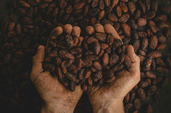 独家2天咖啡和可可体验