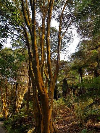 Tikitere, Nueva Zelanda: 20181001_072100_large.jpg