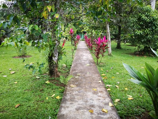 Boca Tapada, Costa Rica: IMG_20180803_061703_large.jpg