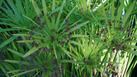 Arzal, Γαλλία: Le Jardin du Prahor