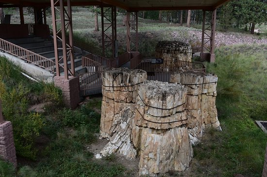 Florissant, CO: Trio of Redwood stumps near Visitor Center