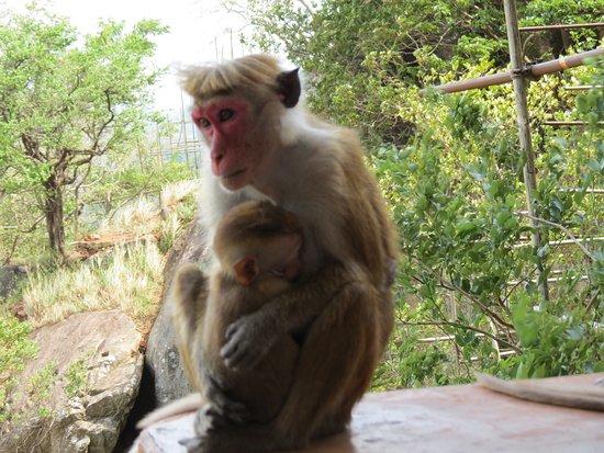 Scimmiette amorevoli
