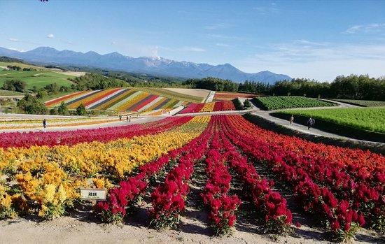 Japan Hokkaido Private Tour: Shikisai-No-Oka Garden (Biei)