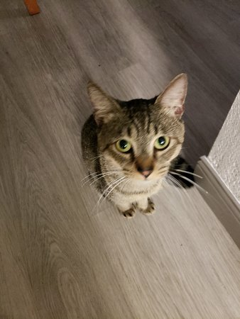 La Quinta Inn Fort Myers Central: Drug-seeking cat in front of the lavatory