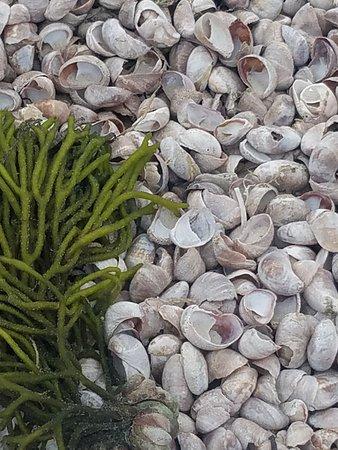 piles of sea shells!