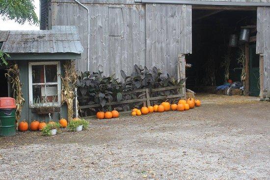 Knox's Pumpkin Farm