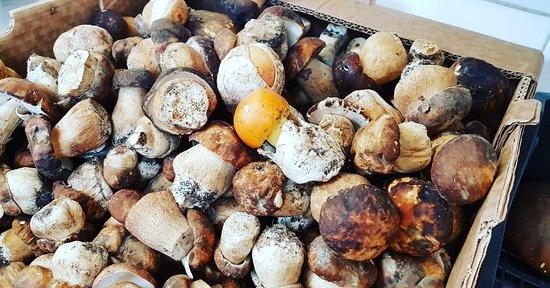 Bortigiadas, Italie : I funghi del monte LIMBARA