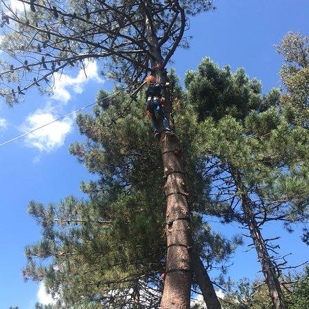 Περιοχή Καλαβρίας, Ιταλία: Arrampicata sull'albero