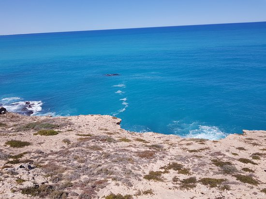 Head of Bight: Whales off Head of the Bight