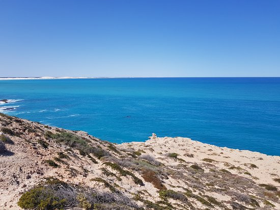 Head of Bight: More whales