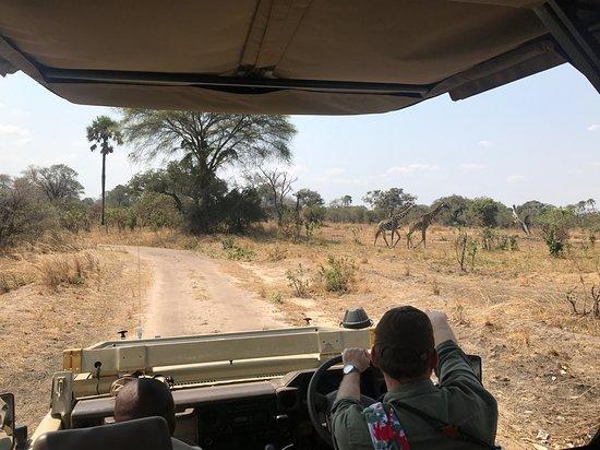Katavi National Park Φωτογραφία