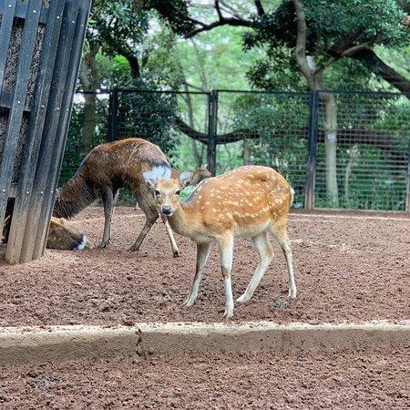 Yumemigasaki Zoological Park