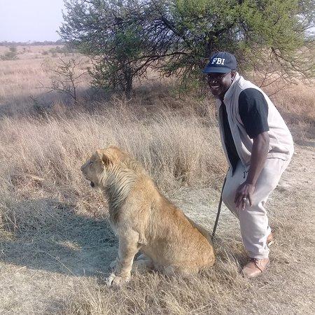 Gweru, Zimbabwe: Posing with a lion during a lion walk
