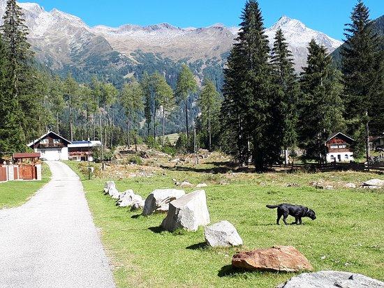 Mallnitz, Austria: Lammfrommer Labrador mit Namen Nelson , Haus-Hund ,