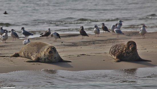 Sint Annaland, Hollanda: Zeehondensafari Oosterschelde