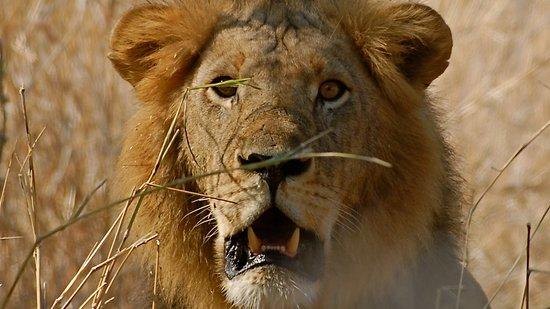 Destinations Kenya Safari