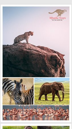 Mbasha Tours And Safaris