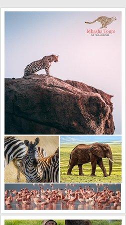 Mbasha Tours And Safaris