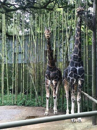 Audubon Zoo-bild