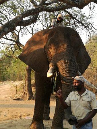 Elephant Whispers: IMG-20180926-WA0010_large.jpg