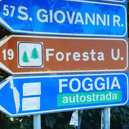 Foresta Umbra: IMG_20180912_101315_536_large.jpg