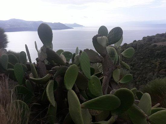 Punta Brigantino: vista