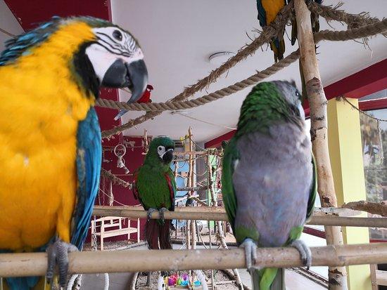 Moja Mala Papugarnia