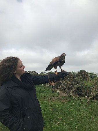 Julianstown, Ιρλανδία: Daisy flew the field for us
