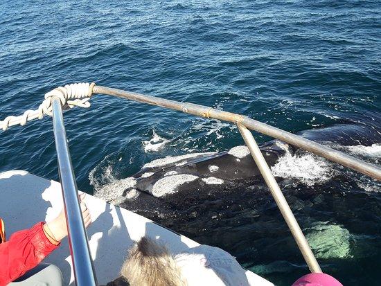 Punta Ballena Jorge Schmid: Increíble experiencia