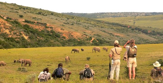 Port Elizabeth, South Africa: Game Drive