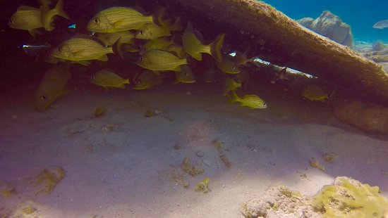 Don Foster's Dive Cayman: Hiding fish under boat wreckage.