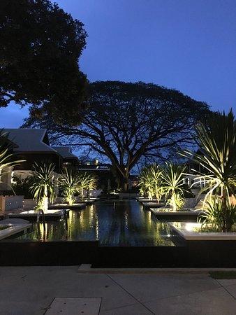 The pool & tree at night