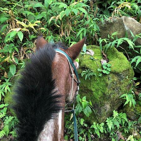 Waipi'o On Horseback: photo2.jpg