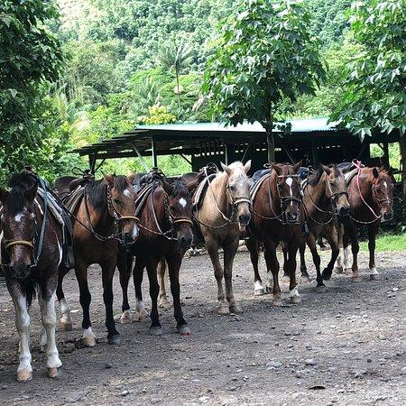 Waipi'o On Horseback: photo3.jpg