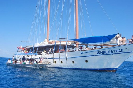 Fijian Islands and Snorkel Full-Day Whales Tale Cruise including...